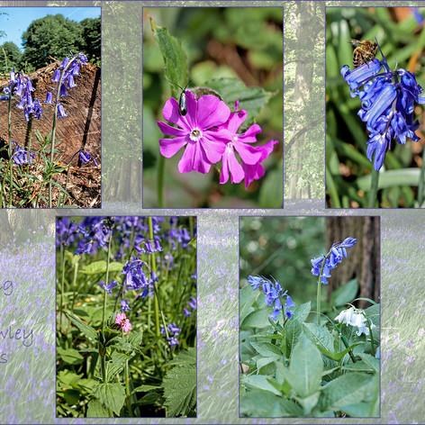 Spring in Shrawley Woods
