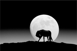 Bowing to the Moon