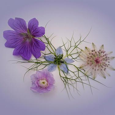 A Little Bouquet