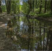 02_Woodland Glade_Peter Southwick.jpg