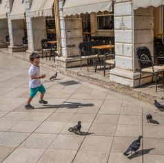 Pigeon Play