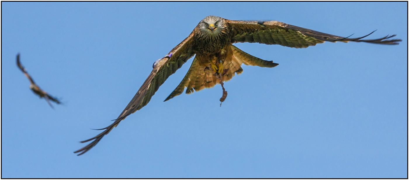Kite incoming