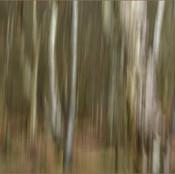 03_Birch Trees_G Price.jpg