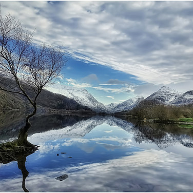That Tree at Llyn Padarn