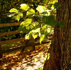 Aspects of Autumn