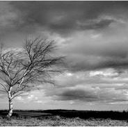 03 Windswept M Nagington (19).jpg
