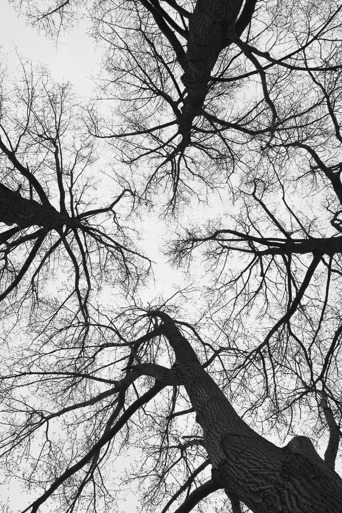 look up into the canopy