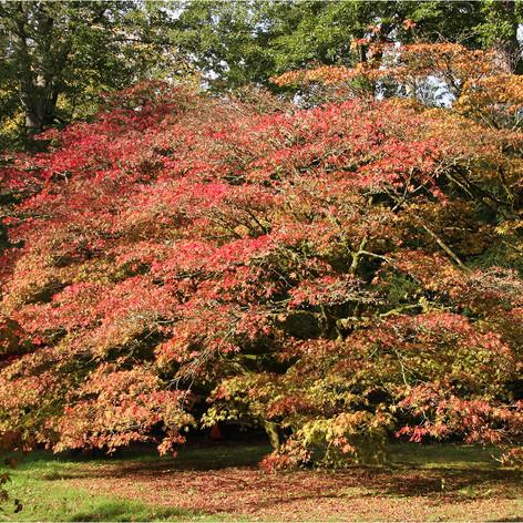 Autumn Tints