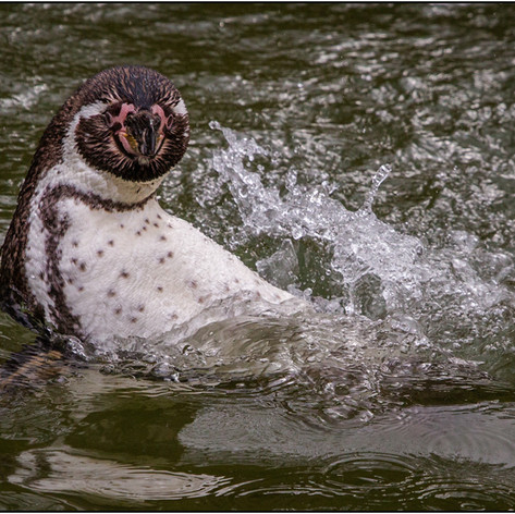 Splash time