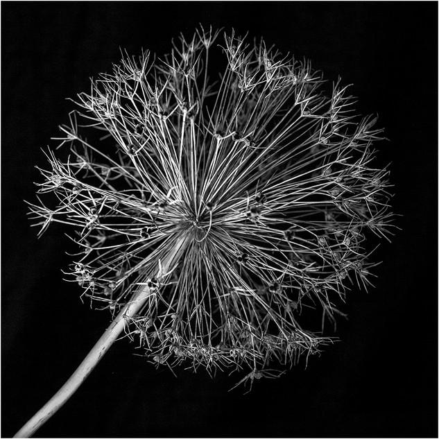 03 Seed head 3 Robert Green (19).jpg