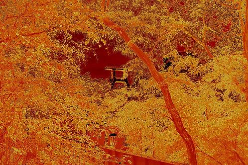 Zollverein Schacht XII - Goldener Herbst
