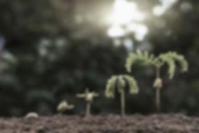 plantita saturada.jpg