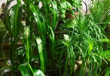 Indoor Plants and Their Care