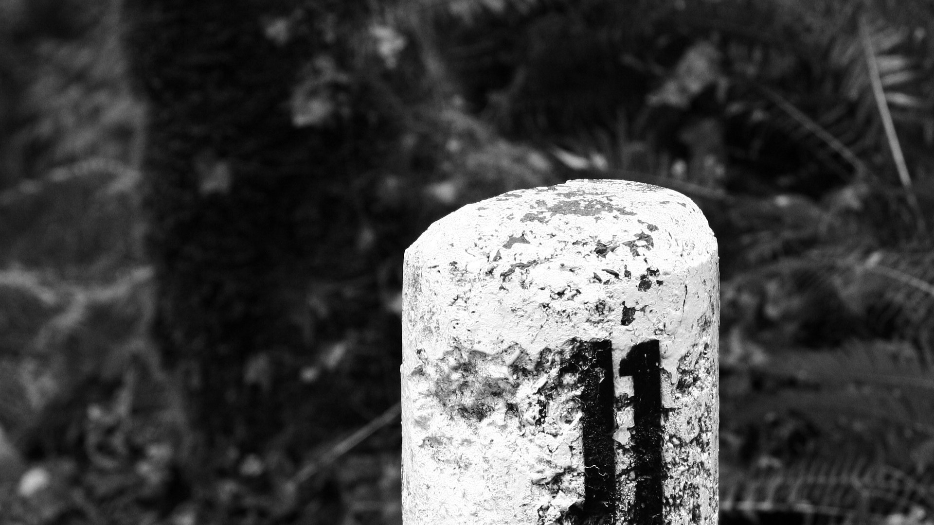 """I am No. 11"" Photograph"