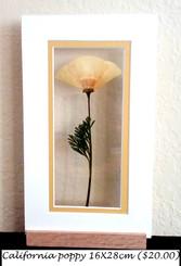 Ca poppy 16X28 cm ($20.00).jpg