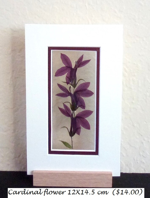 cardinal flower 12X19.5 cm ($14.00).jpg