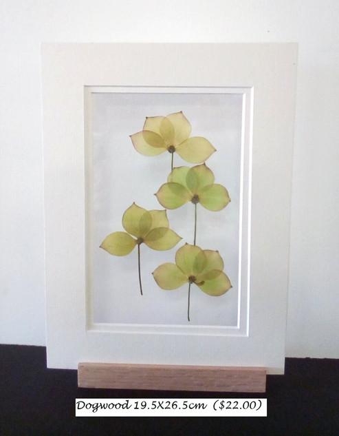 dogwood 3 19.5X26.5 cm ($22.00).jpg