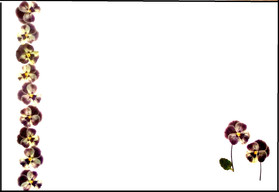 viola place mat - Copy.jpg