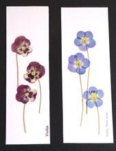 viola & baby blue eyes bookmark.jpg