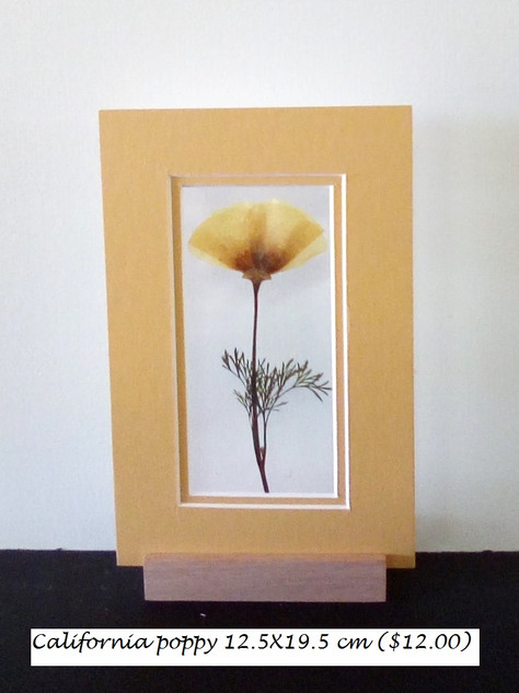 California poppy12.5X19.5 ($12.00)).jpg