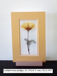California poppy12.5X19.5 ($12.00)).jpg