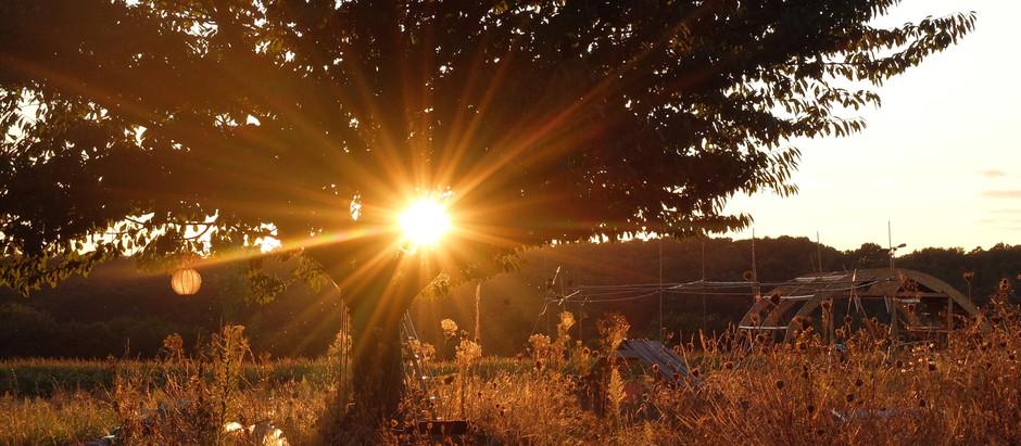 La permaculture : une éthique de la culture pour sauver la nature ... et l'homme