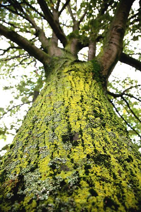 arbre-vertical.jpg