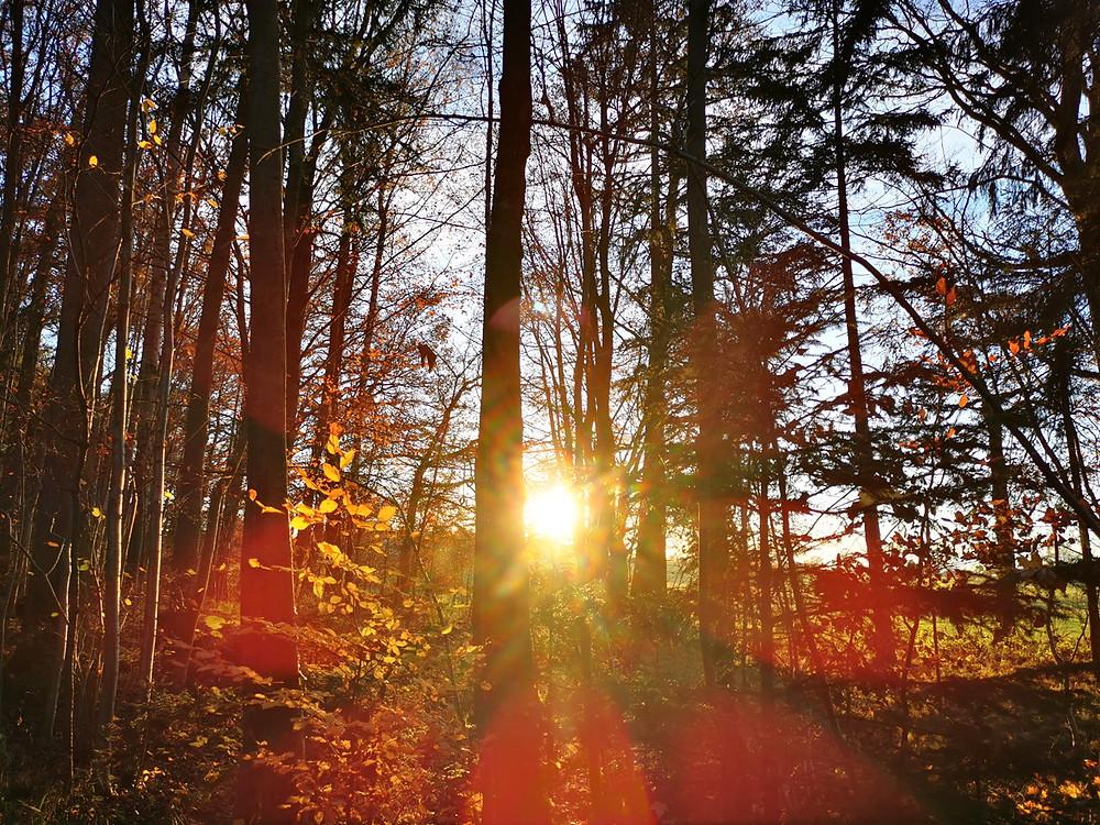 Sonnenlicht im Wald, Herbststimmung, Laub, goldenes Licht