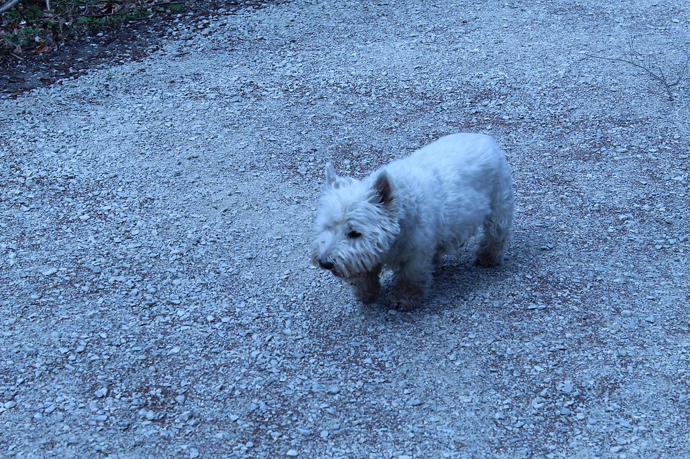 Chiemsee-Hund