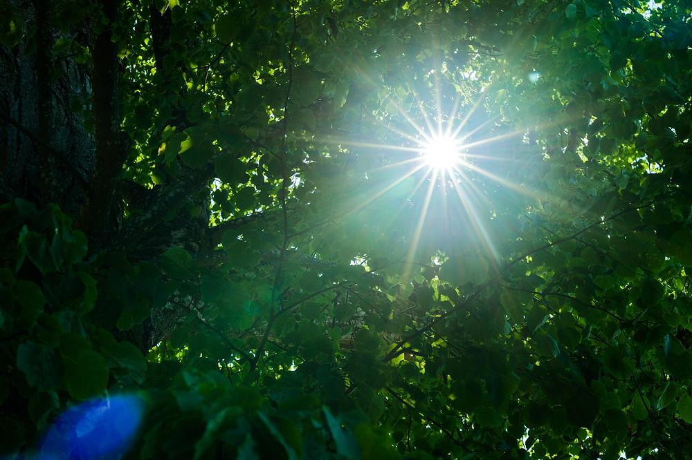 Sonnenlicht, Bäume, grüne Blätter, Strahlen