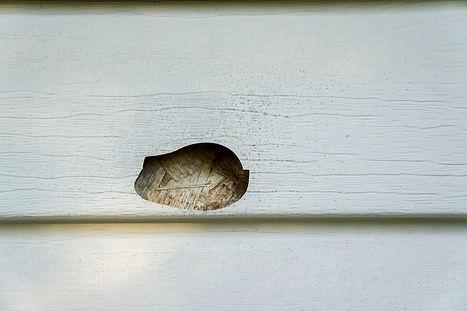 damaged-siding.jpg