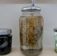 ...organic-looking mass of plastic...