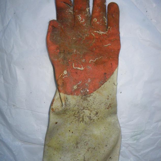 article: fisherman's glove sourced: N. Atlantic Ocean haul: latitude 50 degrees 09.567N  longitude 004 degrees 29.831W distance 7 metres. depth 63 metres. date 28th October 2009