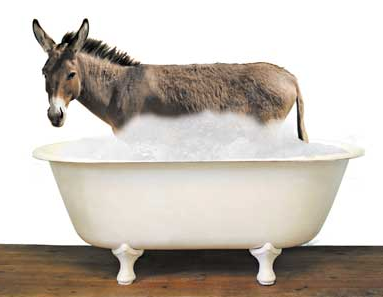 Image result for donkey in bathtub law