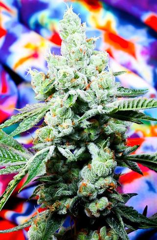 Peaks Cannabis