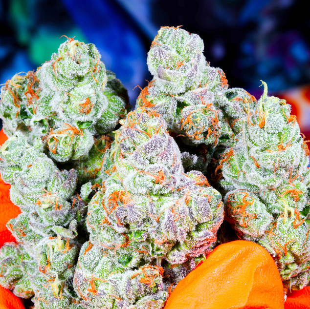 iccollective Cannabis