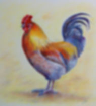 Farmyard Beau-rooster drawing; available as a high quality greetings card or print.