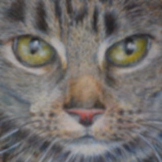 Tabby Cat-available as high-quality greetings card or print.