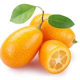 Kumquat - sin fondo