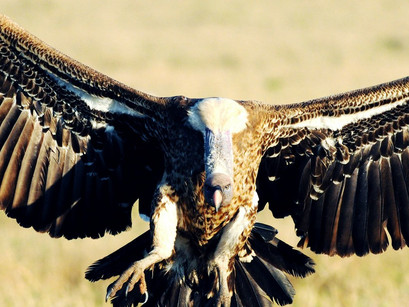 Why I love Vultures