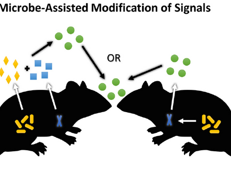 Speciation by symbiosis: The microbiome and behavior