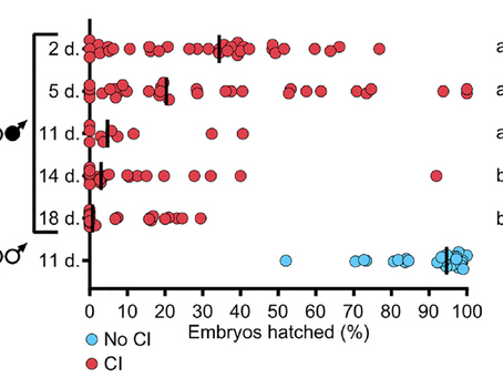 Paternal grandmother age affects the strength of Wolbachia-induced cytoplasmic incompatibility in...