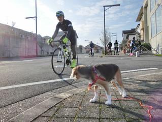 28日(日)は☆白星サイクリング☆