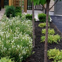 Garden by driveway