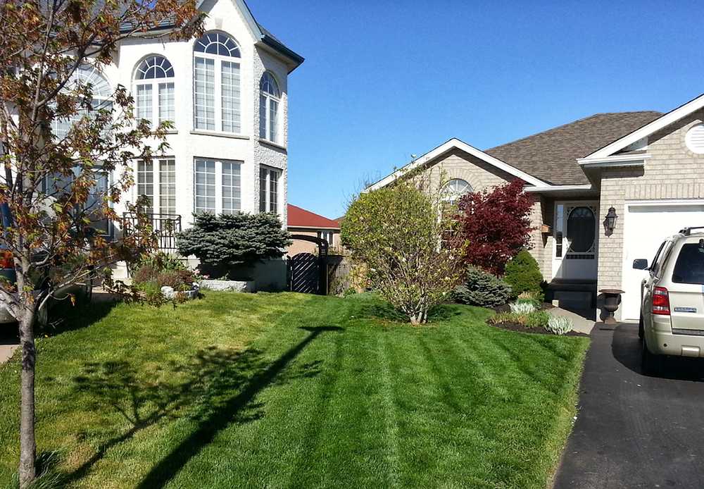 Guelph lawn cutting service