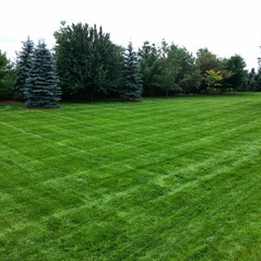 Straight lines cut in lawn
