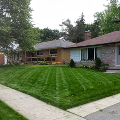 Front lawn just cut