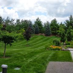 Large lawn just cut