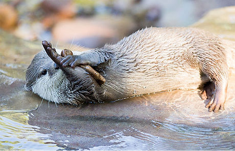 otter-playing-by-water.jpg