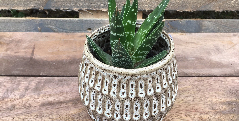 Small Pottery Pot - assorted succulent